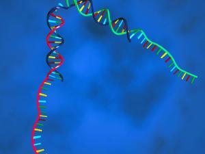 키 크고 똑똑한 자녀를 원한다면 유전적 배경이 먼 배우자를 찾아라.