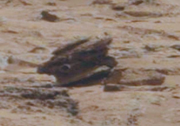 최근 NASA의 화성 사진에서 발견된 이상한 물체들