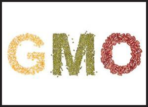 중국은 유전자 변형 종자회사 인수를 시도하면서 반 GMO 사이트를 차단하고 있다.