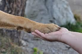 개들이 인간 감정을 인식할 수 있음을 밝힌 연구가 발표되다.