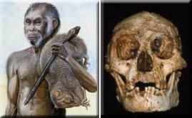 프랑스 과학자들은 호빗이 인간이 아니라고 말한다.