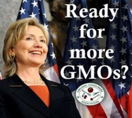 힐러리는 GMO를 지지하고, 몬산토로부터 돈을 받으며, 몬산토 로비스트를 채용한다.