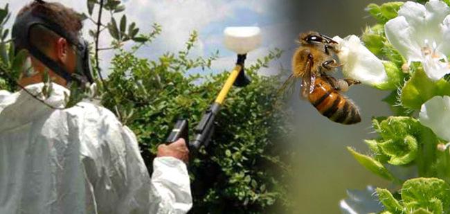 전 세계에서 벌들이 죽는 현상의 원인이 밝혀지고 있다.
