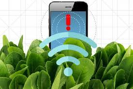 MIT 연구자들이 식물과 인간의 소통 장벽을 허물었다.