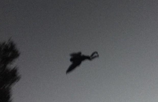 웨스트 버지니아에서 사진에 찍힌 모스맨?