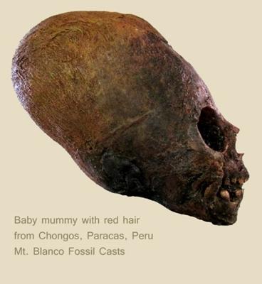 페루에서 발견된 편두 두개골에 대한 DNA 테스트 결과가 공개되다.