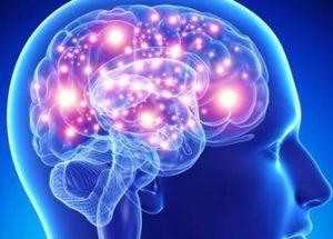 인간의 두뇌가 최대 11차원까지 작용하는 것이 확인되다.