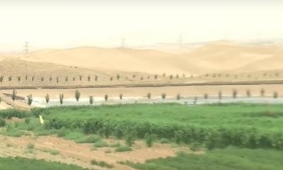 사막을 기름진 토양으로 만드는 데 성공한 중국