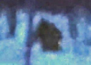 고속도로 옆을 걷고 있던 빅풋을 추적해서 촬영한 러시아인