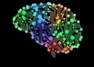 신경과학자들이 두뇌 간의 네트워크를 만드는 데 성공하다