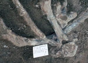 13만 년 전 북미에 인간이 거주했다고 주장하는 논문이 발표되다