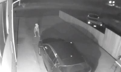 미국 콜로라도 가정집의 방법 카메라에 촬영된 괴생명체