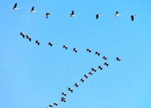 북미 대륙에서 30억 마리의 새들이 사라졌다.